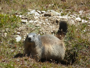 Marmotte au Grand Plan