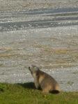 814 Marmotte et lac de la Glière b