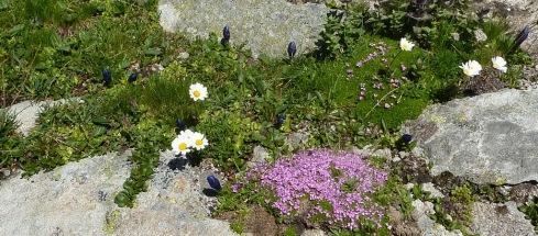 17 Flore Montee col d Aussois b