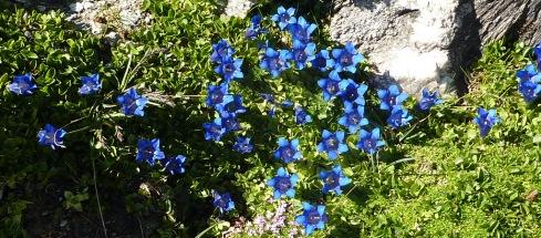 19 Flore Montee col d Aussois
