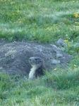 5 Marmotte b