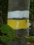 marquage blanc jaune