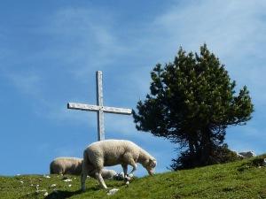 Moutons sur le Mont Outheran